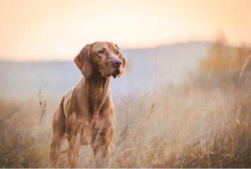 Pienso de alta energía para perros de caza