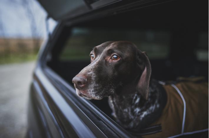 saber cuando dar de comer a un perro de caza