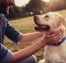 Adiestramiento canino básico. Todo lo que necesitas saber