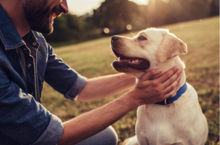 Adiestramiento canino básico. Todo lo que necesitas saber.