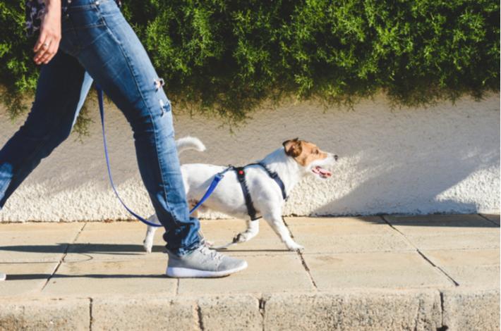 como enseñara un perro a no tirar de la correa