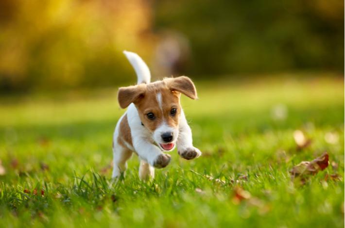 consejos para preparar la llegada de tu cachorro a casa