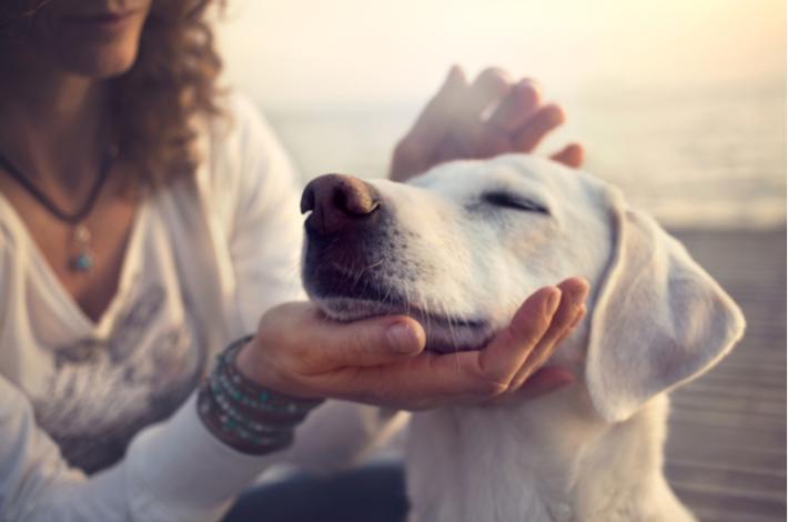 como adiestrar a tu perro con chucherías