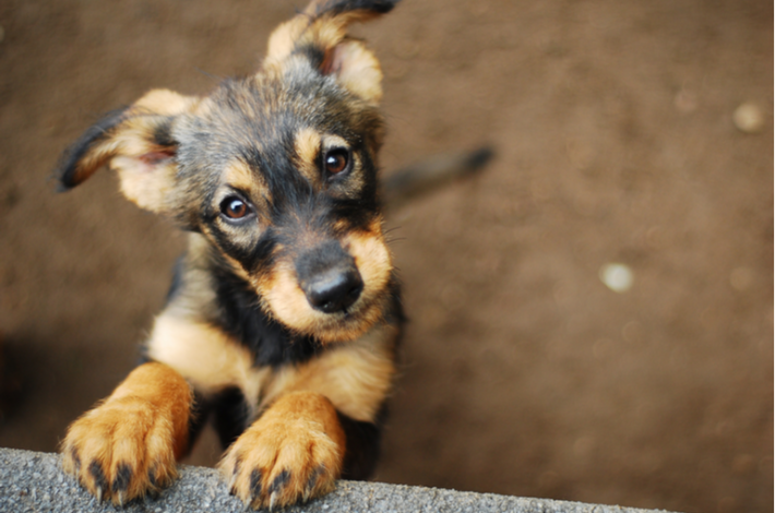 peligros que puedes encontrar en casa para un cachorro