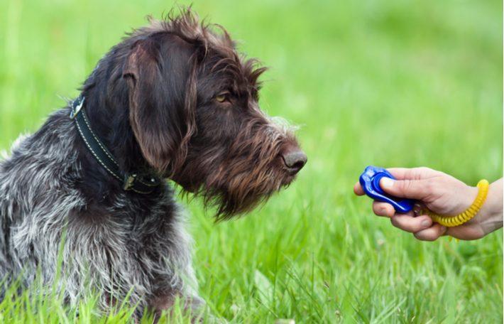 como adiestrar a un perro con un clicker