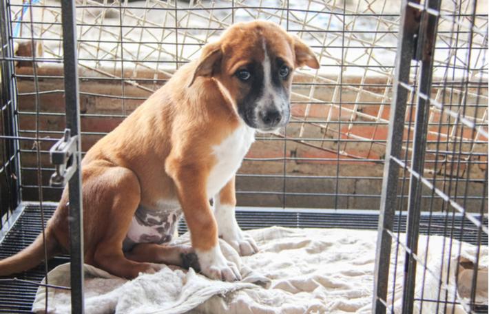 razas de perro que puedes encontrar en una protectora de animales