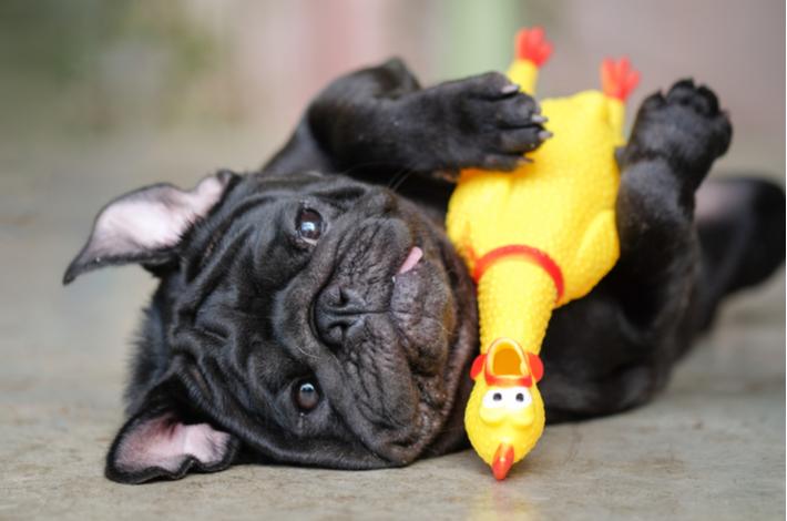 beneficios de jugar para los cachorros