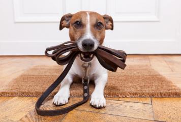 Cuántas veces al día hay que sacar a pasear un perro