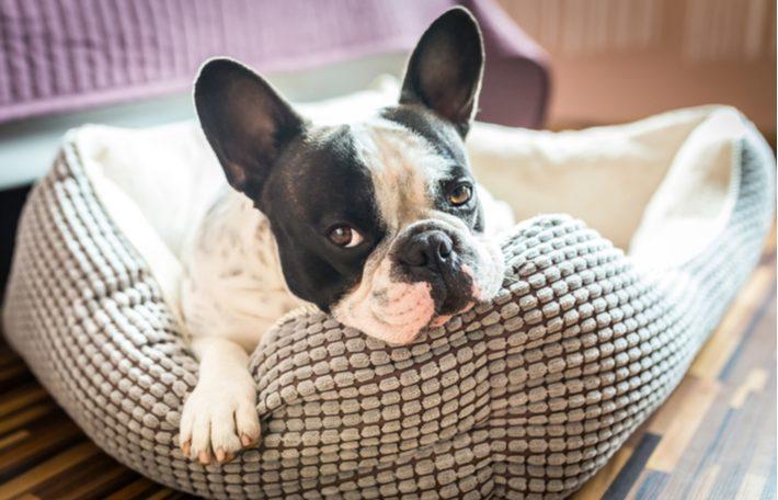 mejores camas para perros pequeños