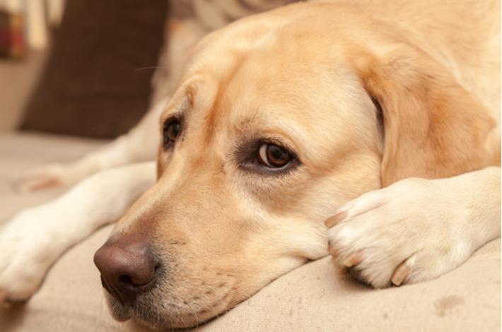 causas de la ansiedad en un perro