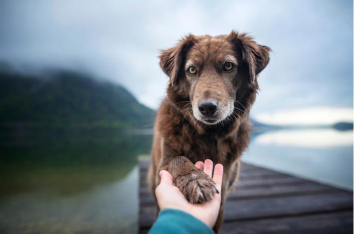 como enseñarle a un perro a dar la pata