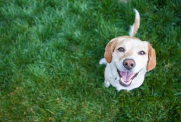Cómo enseñar trucos a un perro