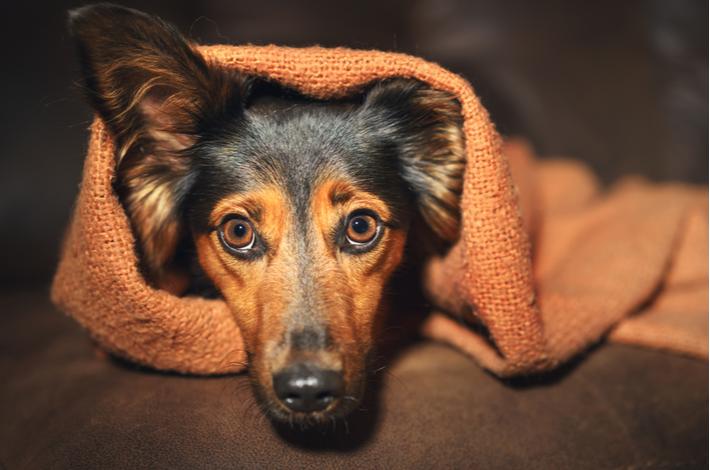como tratar la ansiedad en los perros