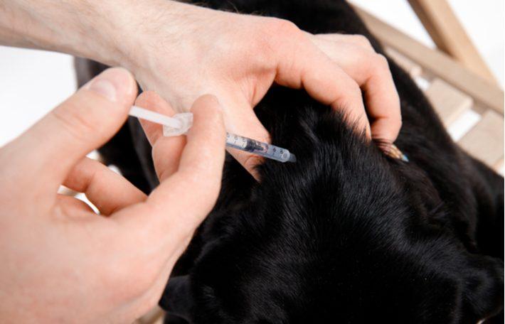 diabetes en los perros