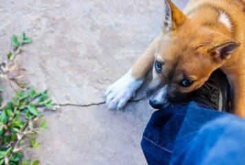 Como enseñar a un perro a no morder