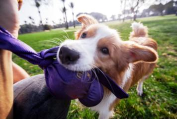 Cómo enseñar a mi perro a no morder