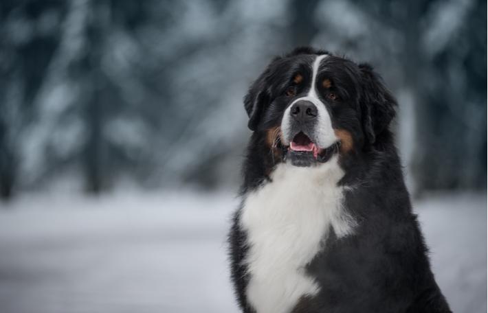 importancia de la alimentación en los perros