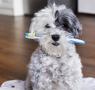 Por qué cepillar los dientes a tu perro