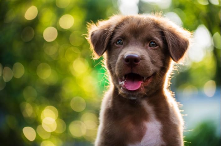 importancia de jugar para los perros cachorros