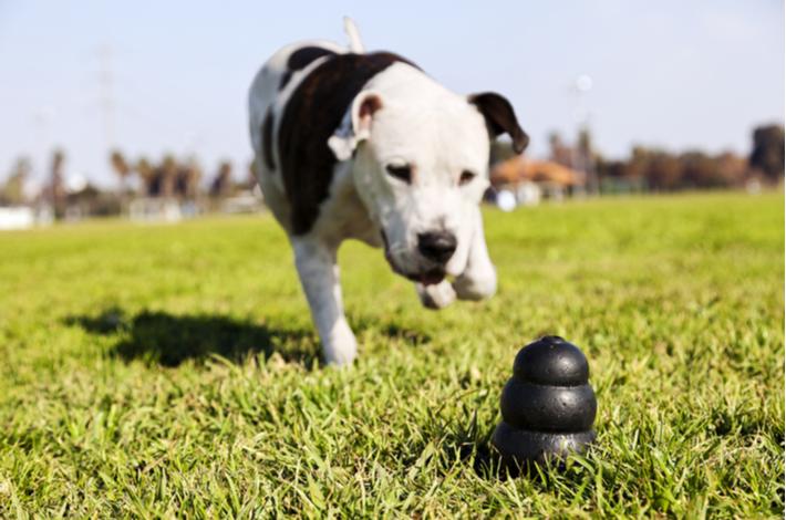 caracteristicas juguete para perros kong