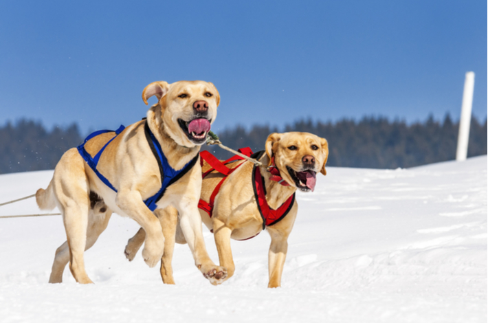 mejor arnes para correr con perros marca ThinkPet