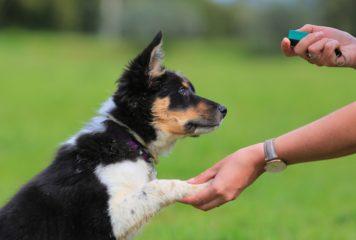 Clicker para perros. Adiestramiento canino