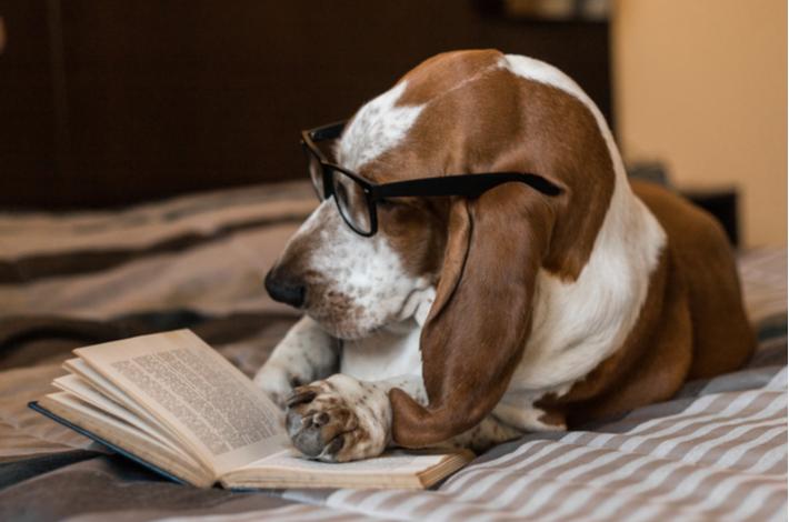 libros de adiestramiento canino para tu perro