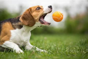 Mejores juguetes para perros
