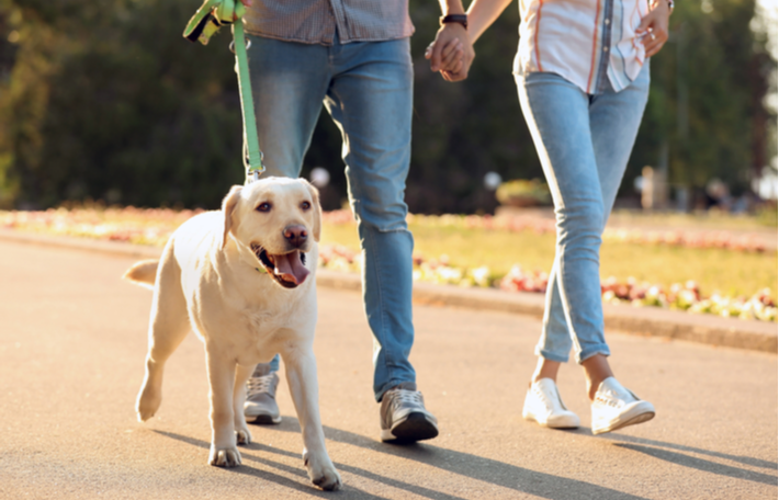 pautas para pasear a tu perro