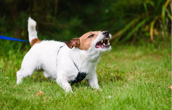 razones por las que un perro puede morder