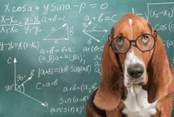 Las 10 razas de perro más inteligentes del mundo