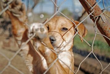 10 razones por las que adoptar un perro