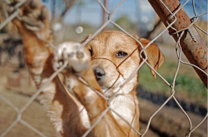 10 razones por las que adoptar a un perro
