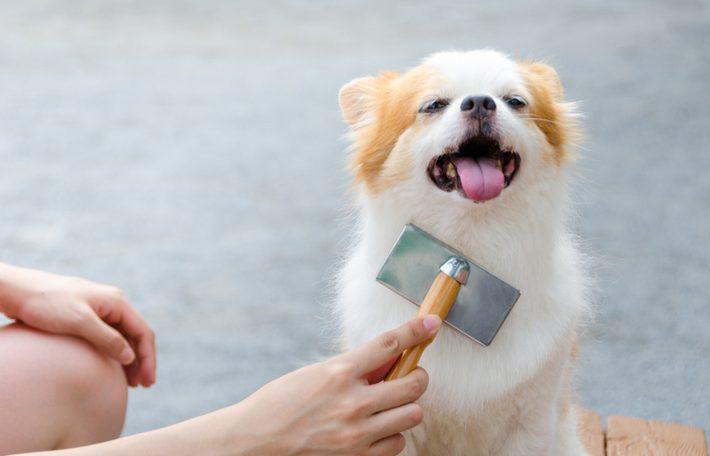 tipos de cepillos para perros