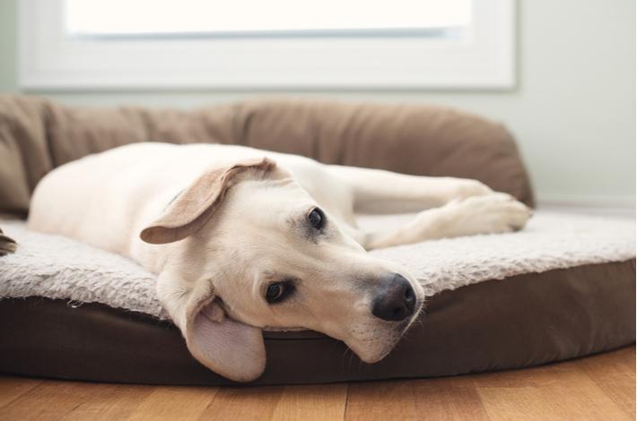 mejores camas para perros 2020
