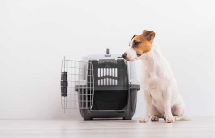 trasportin rígido para perros