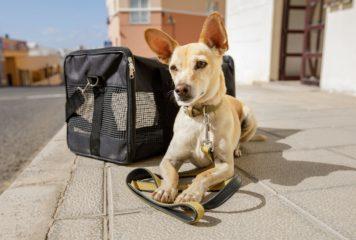 Trasportines para perros