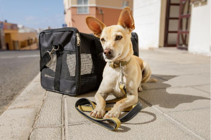 trasportin para perros