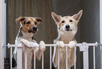 Vallas para perros