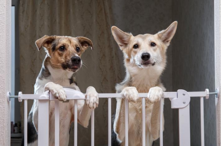 tipos de vallas para perros