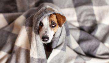 Cómo limpiar las manchas del ojo de los perros