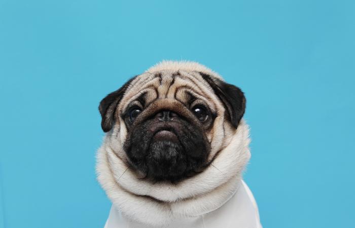 El Pug