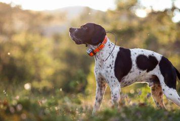 GPS para perros
