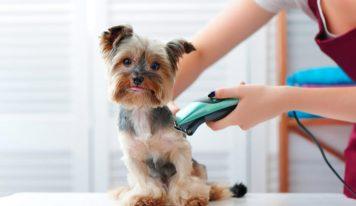 Maquina para cortar el pelo a los perros