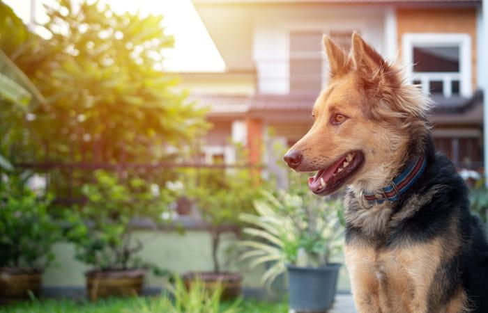 perros guardianes de casa