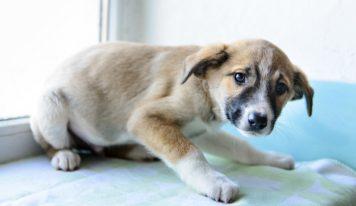 ¿Por qué tienen  miedo los perros?