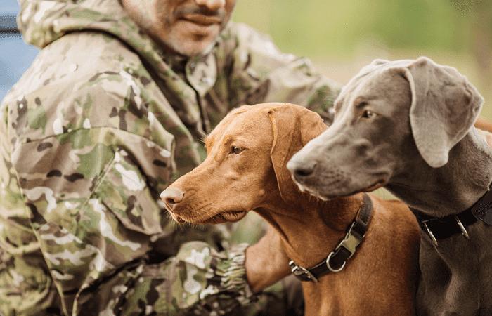 tipos de perros de caza