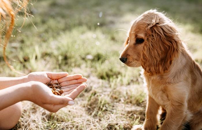 cuánto cuesta mantener un perro - alimentación