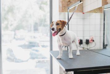 Máquina cortapelos para perros