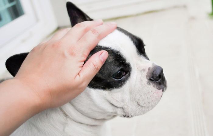 Ataque Epileptico en perros